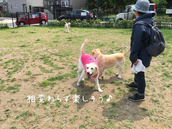 eri_20160619201257298.jpg