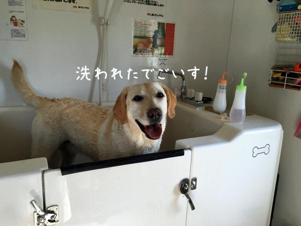 furo_20160508195229e53.jpg