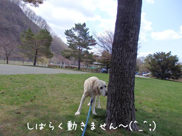 maru_201604262214449db.jpg