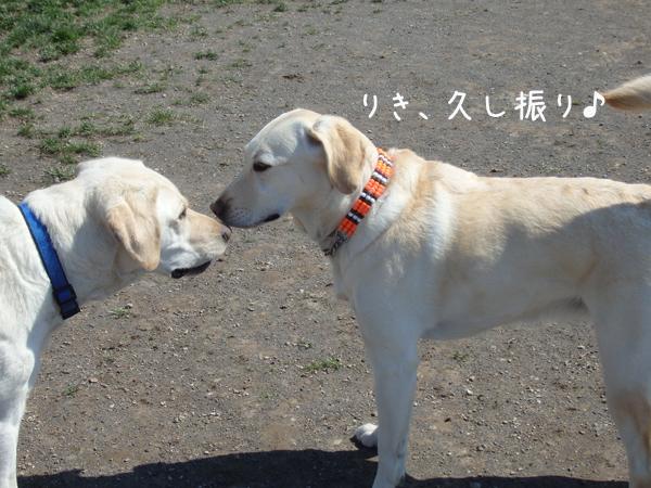 riki_2016050819525986f.jpg