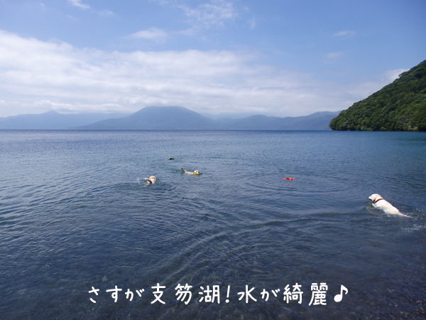sikotuko_20160713213157f4b.jpg