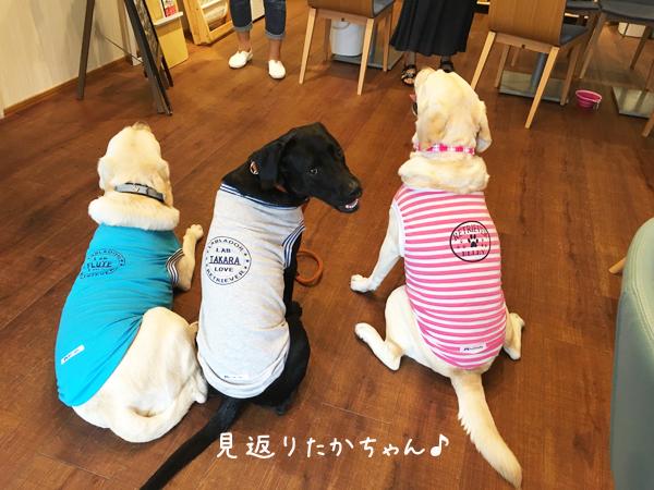 takara_20160817154412273.jpg