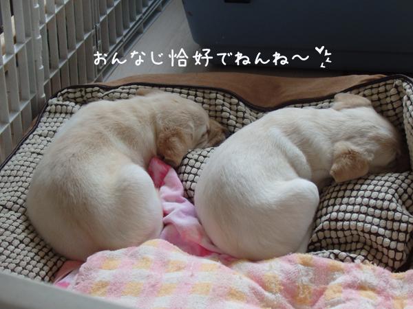 usirosugata_201604121938462f1.jpg