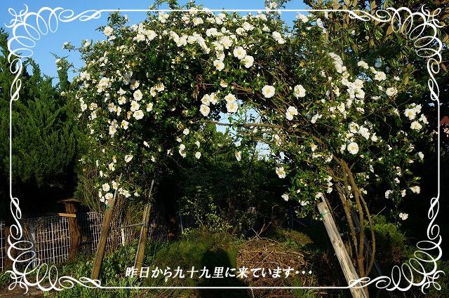 九十九里円