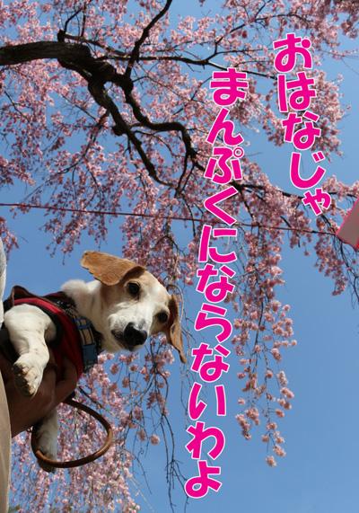 kaiko8.jpg