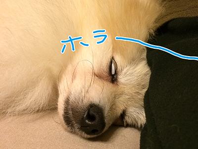 IMG_3730.jpg