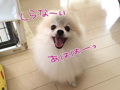 IMG_3817.jpg