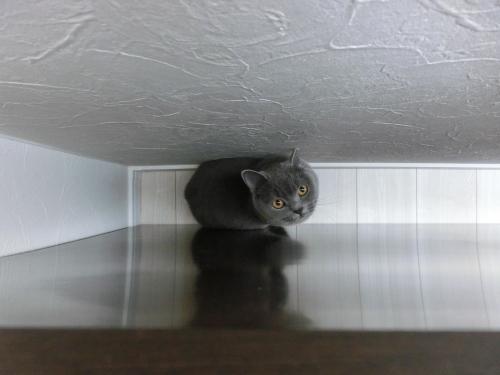 めのうの隠れ家