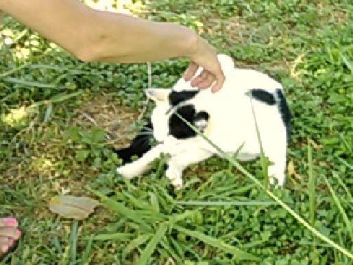 知念岬ネコ