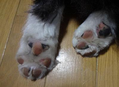 お風呂上りの足