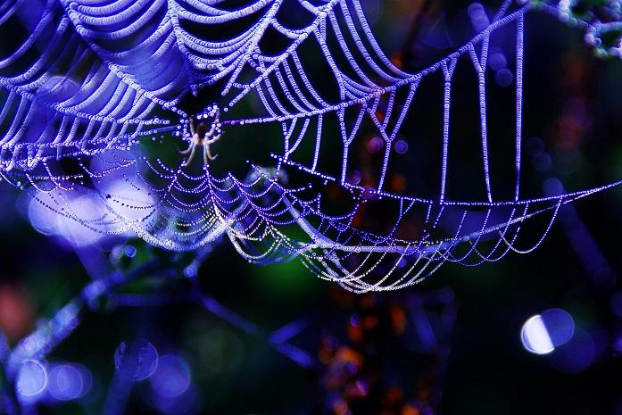 蜘蛛の巣 マクロ