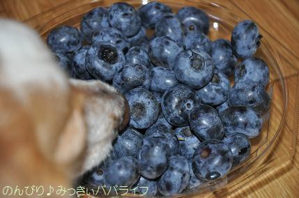 blueberry201603.jpg