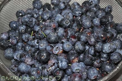 blueberry201604.jpg