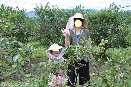 blueberrygari20160703.jpg
