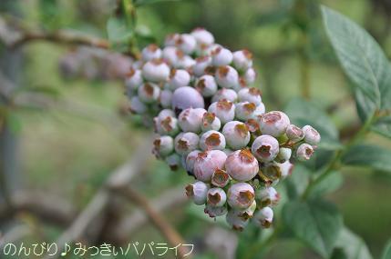 blueberrygari20160715.jpg