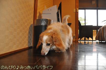 tateyama201607028.jpg