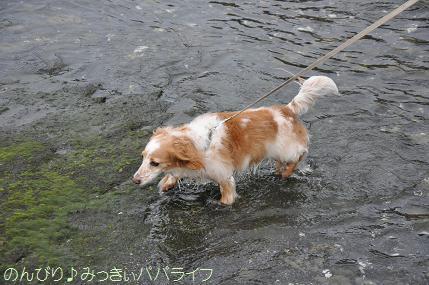 tateyama201607038.jpg