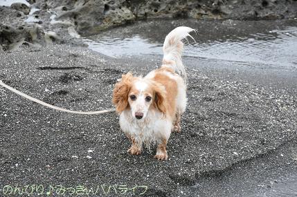tateyama201607040.jpg
