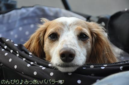 yakitori20160511.jpg