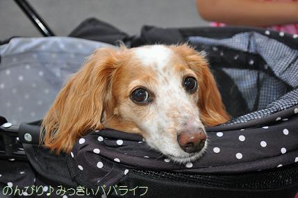 yakitori20160713.jpg