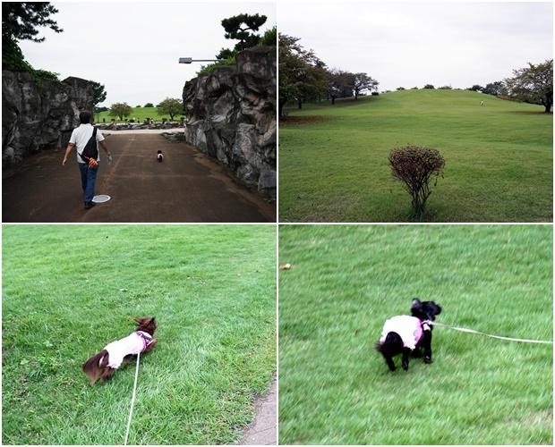 20160917いせさき公園11