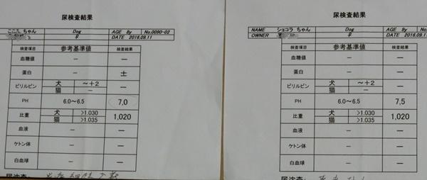 CIMG0480検査111