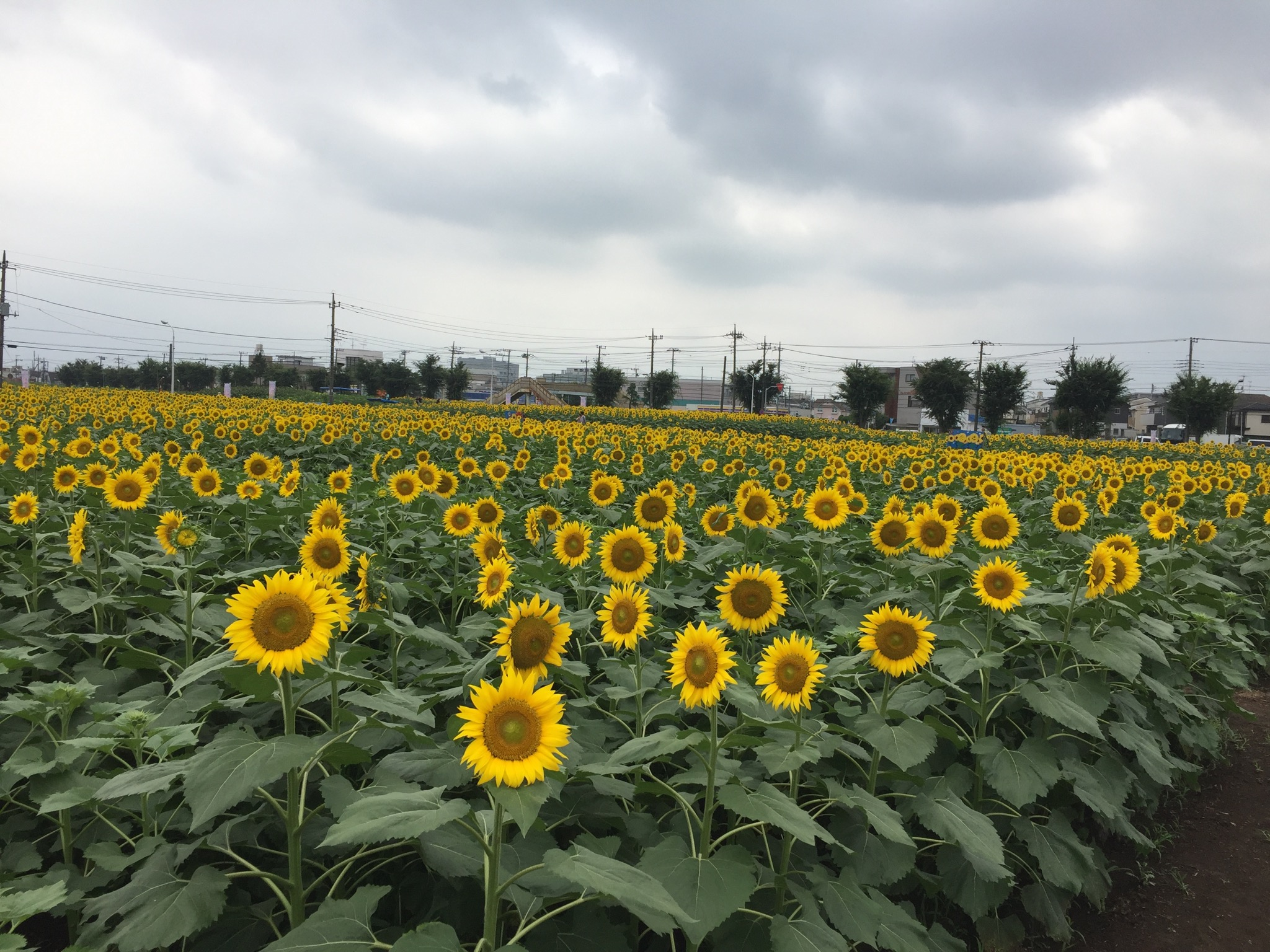 武蔵村山ひまわりガーデン3