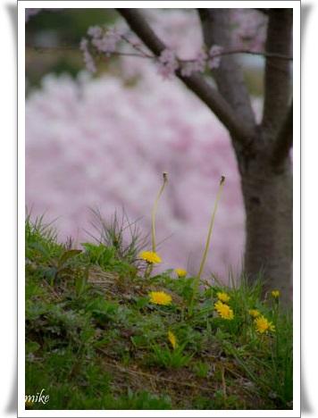 桜6040210