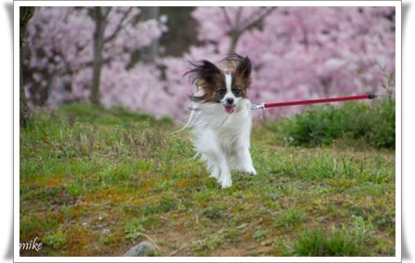 桜604025