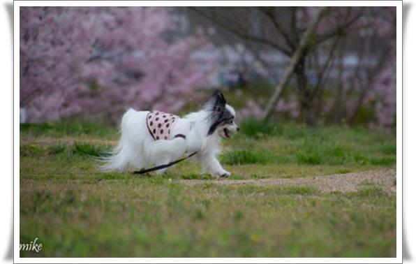 桜604024