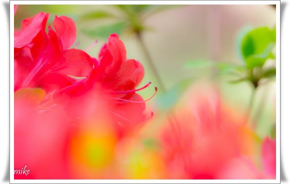 植物園604204