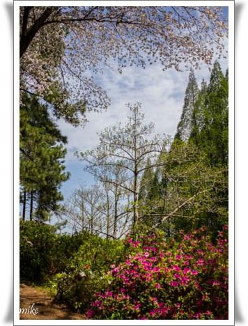 植物園604203