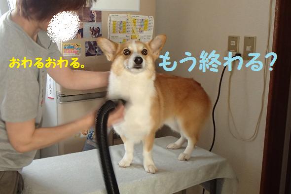 お風呂11