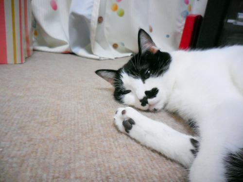 くぅ足伸ばし寝