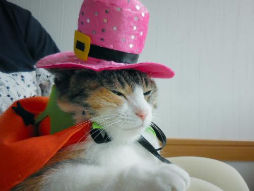 みくピンク帽寝る