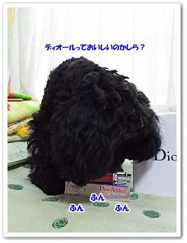 DSC_7571 (338x450)