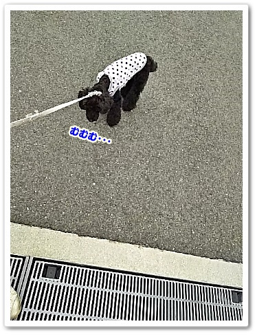 DSC_5395 (338x450)