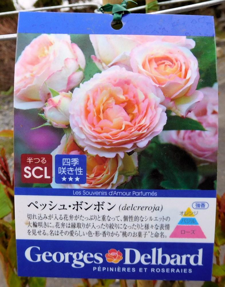 DSCN3866-01.jpg