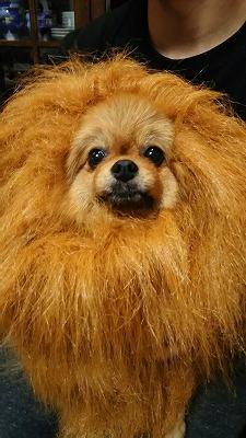 s-ライオン