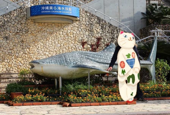 美ら海水族館☆_R_R_R