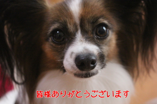 DIgNN6f__89xyzP1475103456_1475103560.jpg