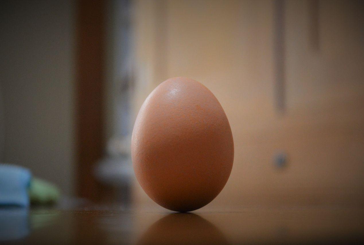 立つ卵 撮影 松田光司