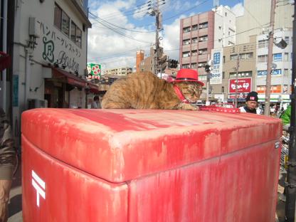 1 和歌山の「玉駅長」に対抗するネコ君