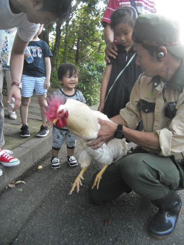 ⑤ 飼育員が小さな子に触るよう言ってます