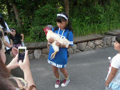 ⑥ この鶏は人間に慣れていて子供にもおとなしい