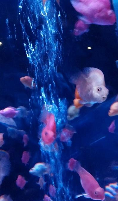 ⑪ 魚の表情が面白い