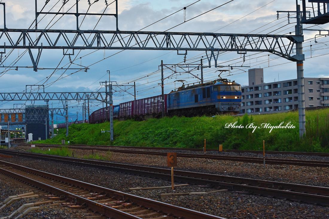 DSC_1357.jpg