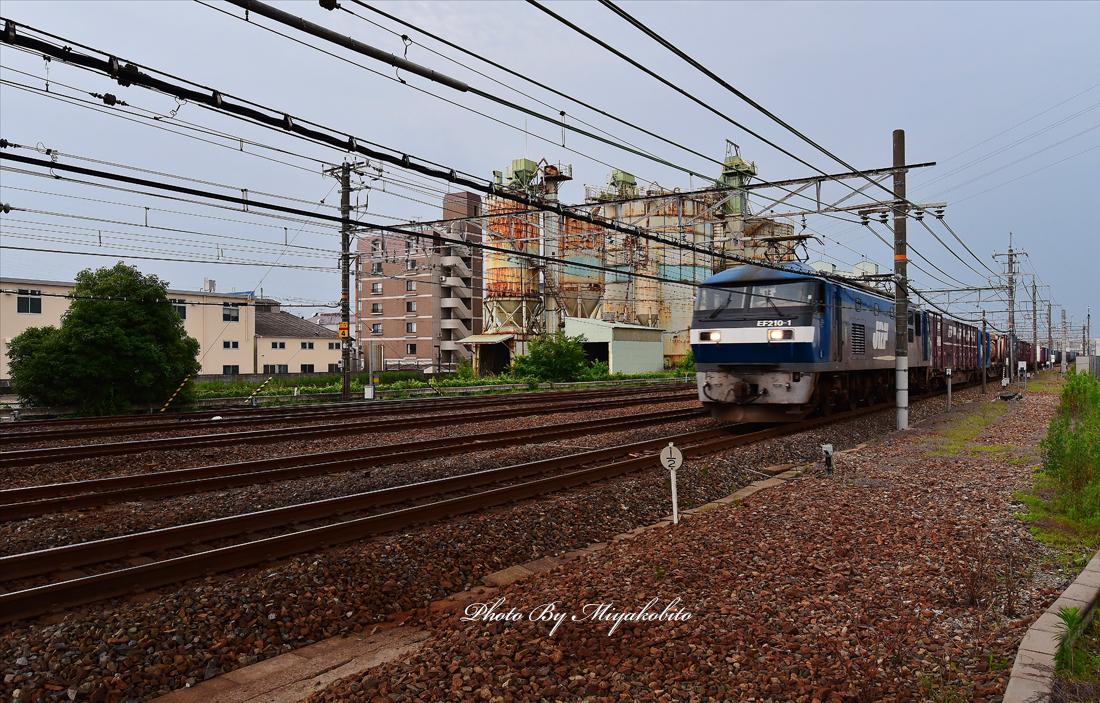 DSC_9326.jpg