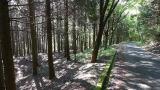 20160514旧東海道原生の森091