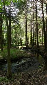 20160514旧東海道原生の森093